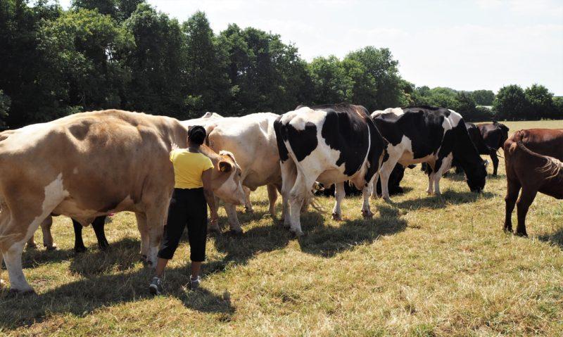 Animal Sanctuary   Hugletts Wood Farm   Photo Diary